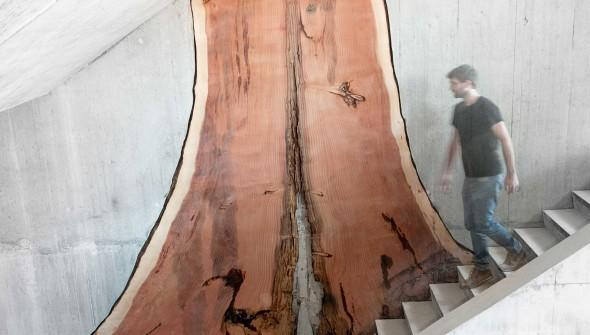 Sequoia_bas_web
